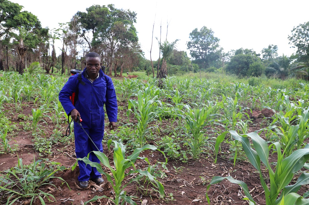 Domonstrating how to spray biopesticide against FAW