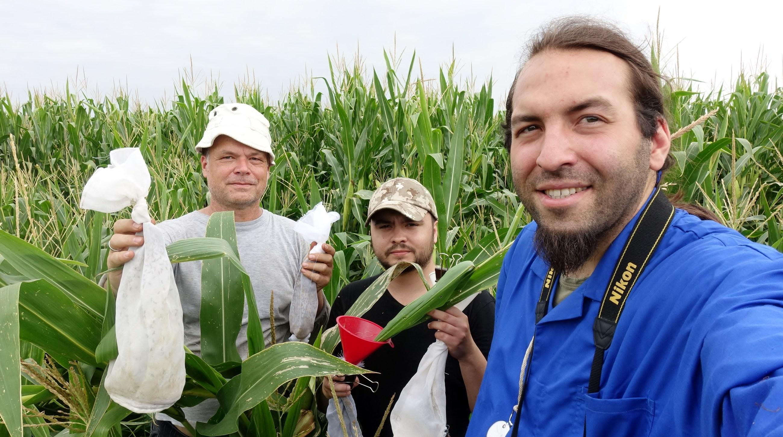 Stefan maize field Hungary