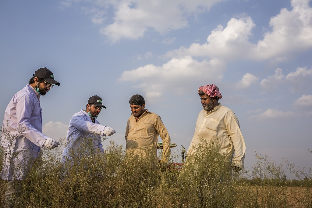 Parthenium in Pakistan